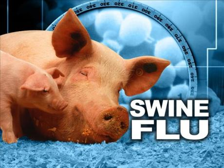 swine%20flu%203